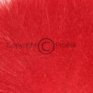 Arctic Fox, tail hair Red