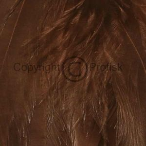 Schlappen feathers L Brown
