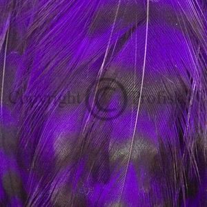 Cock Hackles Grizzly Purple